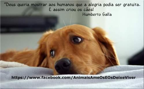FRASE Humberto Salla CÃO