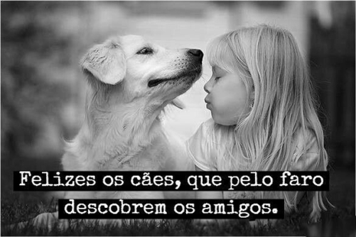 frases-caes-amigos